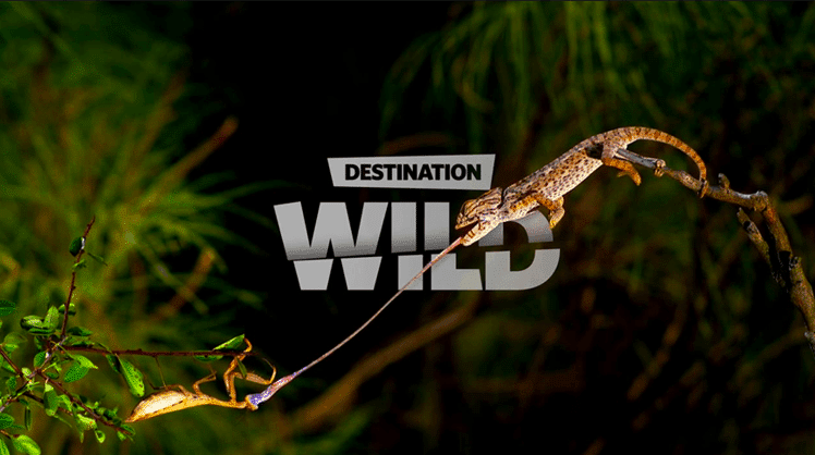 destinationwild_748x418