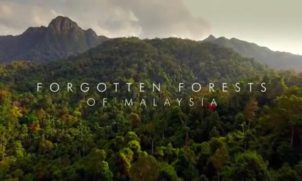 Forgotten Forests of Malaysia